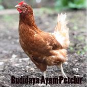 Budidaya Ayam Petelur icon