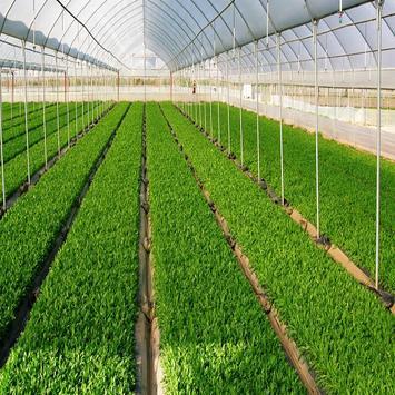 Zango Farm apk screenshot