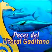 Peces de Cadiz icon