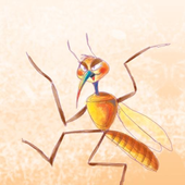 زعتر يكتشف الحشرات - زازا icon
