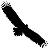 Finding Birds icon