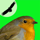 Birds of your Town icon