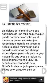 El Yorkshire Terrier apk screenshot