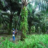 Oil Palm Minimum Wage Cal icon