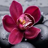 Orchid Spa and Salon icon