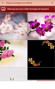 Mensagens e Frases com Flores apk screenshot