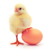 Guide Egg inc icon