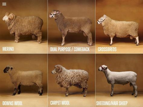 Sheep Breeds by AWEX poster