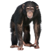 FindChimp icon