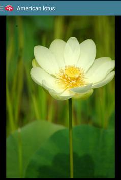 Aquatic Plants apk screenshot