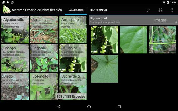 Banana Weed Identification apk screenshot