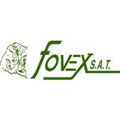 Infovex icon