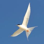 Australian Birds Guide icon