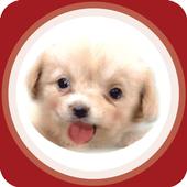 루팅크라운 공략커뮤니티 icon