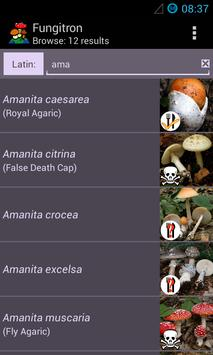 Fungitron - mushroom guide poster
