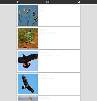 Thep Anmatyerr Birds poster