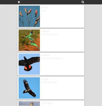 Kune Birds poster