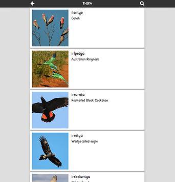 Thipa Pertame Birds poster