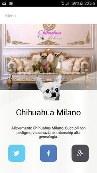CHIHUAHUA MILANO poster