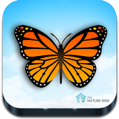 Indian Butterflies icon