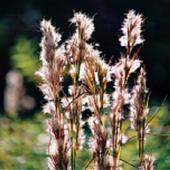 Nueces River Plants icon