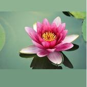 [唯識佛經] - 地藏菩薩本願經唯識觀 Buddhism icon