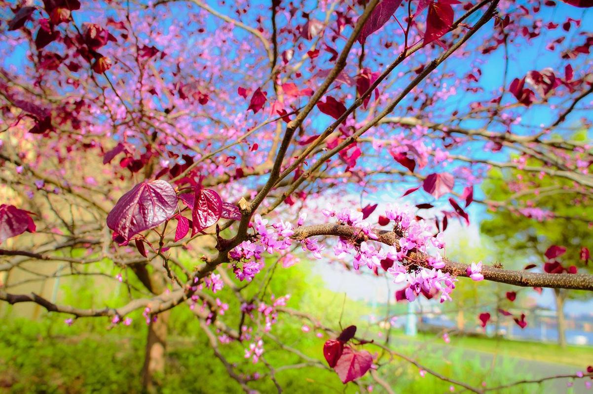 Spring view hd wallpaper apk download free for Sfondi primaverili