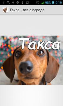 Такса - уход за собакой poster