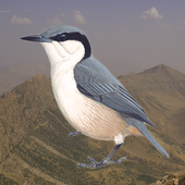 Birds of Peramagroon icon