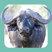 Sasol Wildlife for Beginners icon