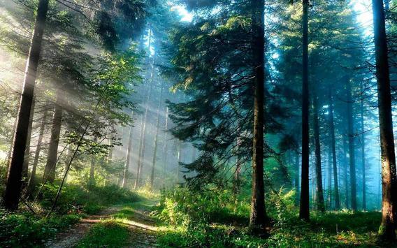 Pink & Green Forest wallpaper apk screenshot