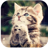 dream cat lwp icon