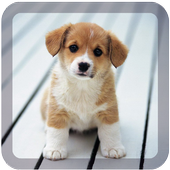 dream dog lwp free icon