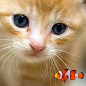KITTY & FISH LIVE WALLPAPER(1) icon