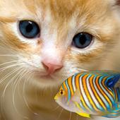 KITTY & FISH LIVE WALLPAPER(8) icon