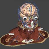 BioTK Head and Neck icon