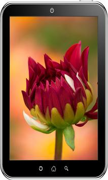 Flowers Wallpaper HD screenshot 14