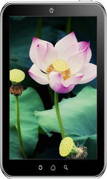 Flowers Wallpaper HD screenshot 1