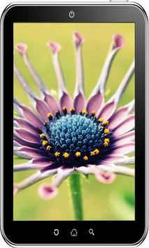 Flowers Wallpaper HD screenshot 2