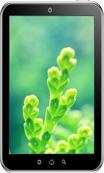 Flowers Wallpaper HD screenshot 5