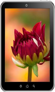 Flowers Wallpaper HD screenshot 6