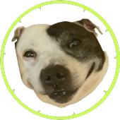 Dog Vs Spike Circle icon