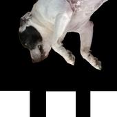 Dog Don't Fall, Jump! icon