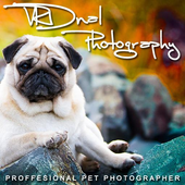 VRDnal Photography icon
