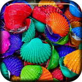 Color Shells Live Wallpaper icon