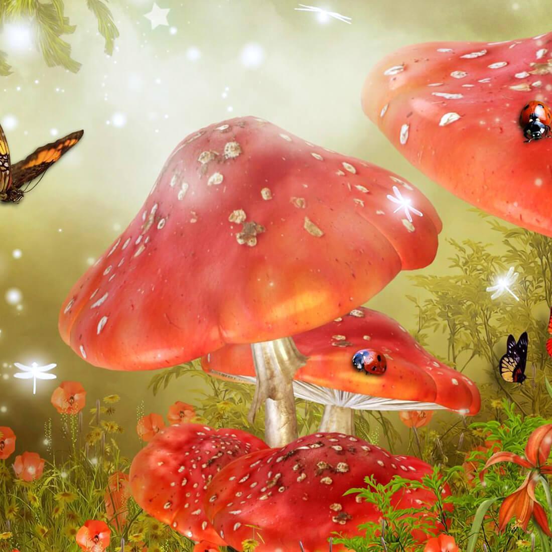 что каждой картинки живых грибов широком