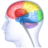 The Brain's Link to the Senses icon