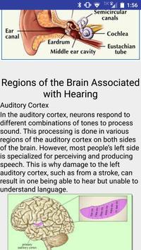 The Brain's Link to the Senses apk screenshot