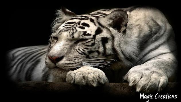 White Tiger Wallpaper poster