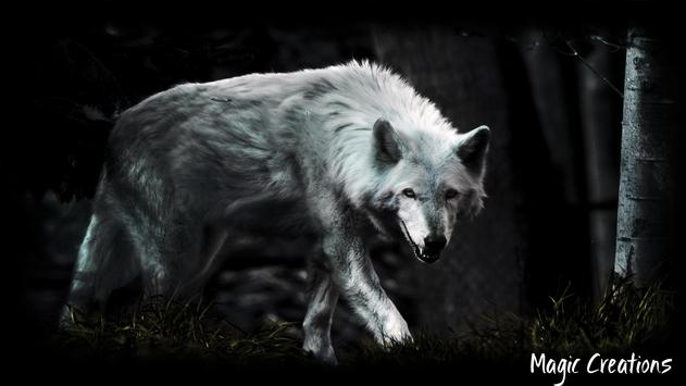 White Wolf Wallpaper poster